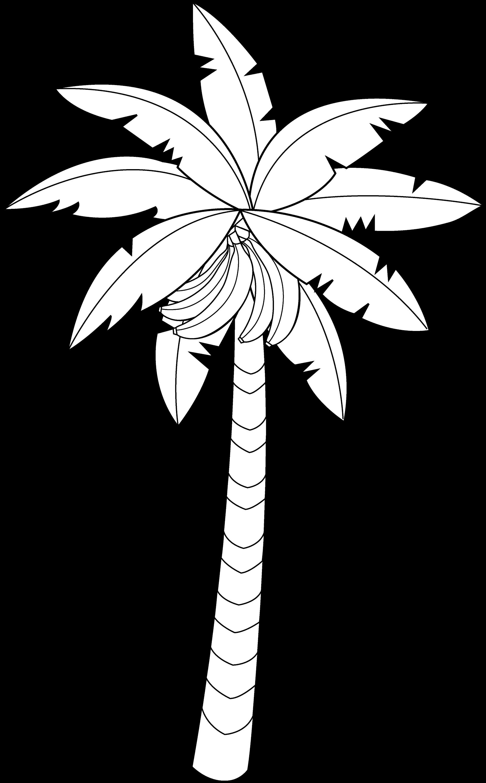 Banana Tree Line Art Free Clip